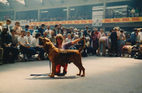 Verdensvinder 1985 Multi CH Wynhurst Hazel med sin meget stolte ejer:)